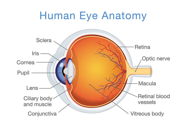 glossary of medical terms east valley ophthalmology