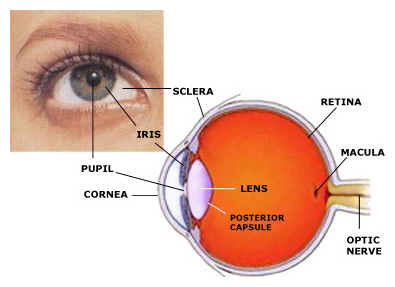 Cataracts Mesa Arizona | East Valley Ophthalmology
